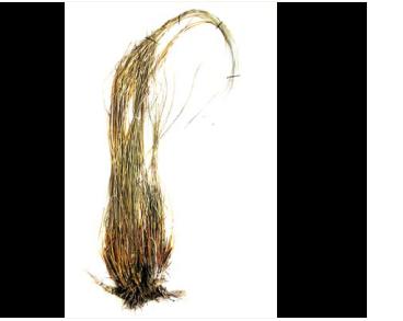 Ковила пухнастолиста (Stipa dasyphylla (Czern. ex Lindem.) Trautv.)