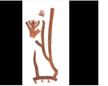 Лофосифония ползучая (Lophosiphonia reptabunda (Suhr.) Kylin)