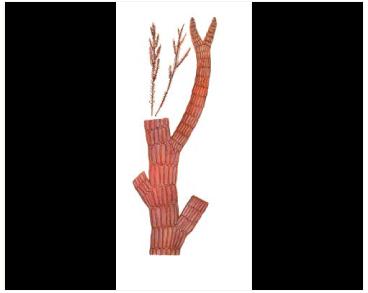 Птеросифонія пірчаста (Pterosiphonia pennata (C. Agardh) Sauv.)