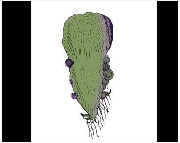 Таргіонія підлиста (Targionia hypophylla L.)