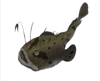 Морський чорт європейський (Lophius piscatorius Linnaeus, 1758)