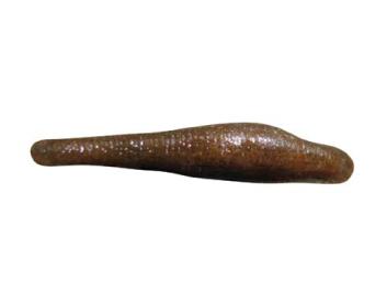 Лягушачья пиявка (Batracobdella algira (Moquin-Tandon, 1846))