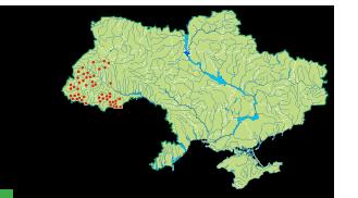 Червона книга України. Білоцвіт весняний Leucojum vernum L. (incl ...