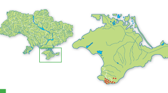 Comperia comperiana (Steven) Asch. et Graebn. (C. taurica K.Koch, Himantoglossum comperianum (Steven) P.Delforge, Orchis comperiana Steven)