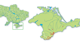Dactylorhiza iberica (M.Bieb. ex Willd.) Soó (Orchis iberica M. Bieb. ex Willd.)
