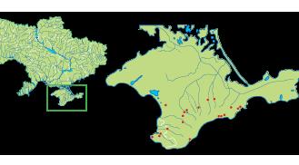 Rumia crithmifolia (Willd.) Koso-Pol. (Cachrys taurica M.Bieb. 1808, non Willd. 1801; Rumia taurica Hoffm.; Sanicula crithmifolia Willd.; Trinia crithmifolia (Willd.) H.Wolff; T. taurica (Hoffm.) Schmalh.)